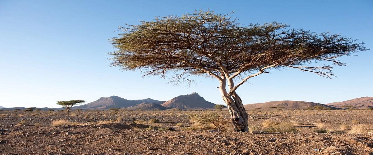 5 Days Fes Sahara desert Tour
