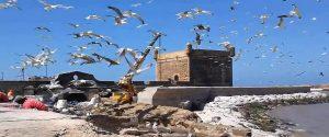 9 Days Tour Fes Sahara Desert Atlantic Coast